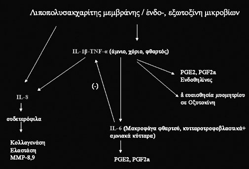 Σχήμα 4. σχηματική αναπαράσταση της